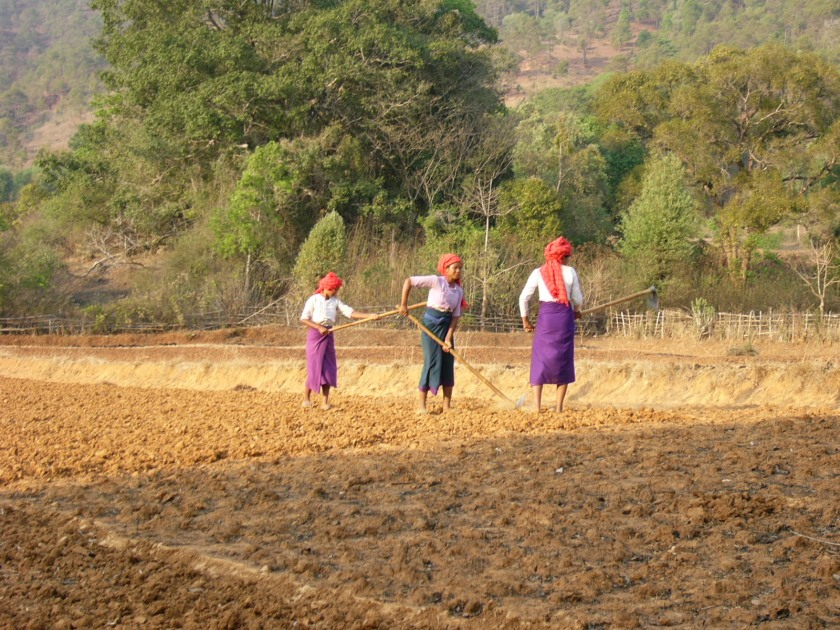 Burmese_women_working_on_the_fildes