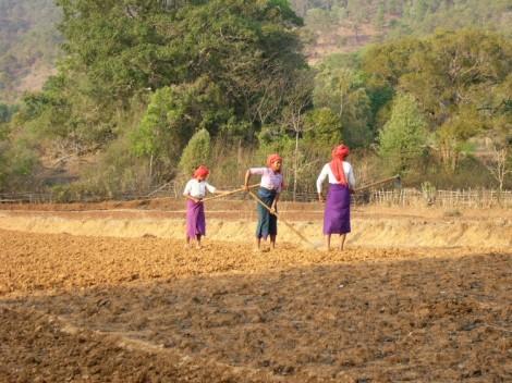 Burmese women working in fields. Courtesy of Wikimedia Commons.