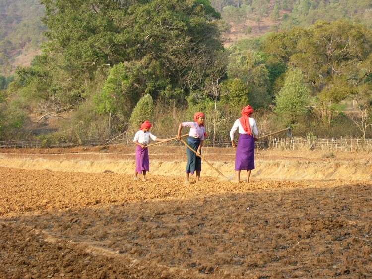 Burmese women working in fields. Courtesy of Wikimedia Commons.