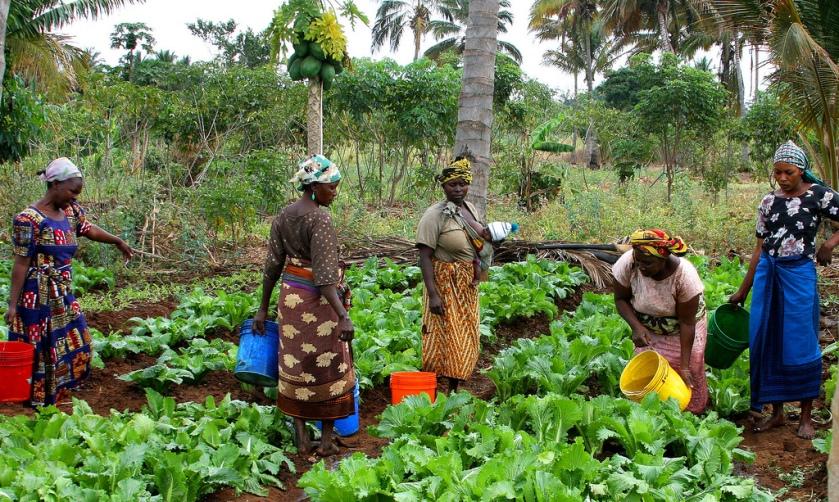 Women farmers, Morogoro, Tanzania.  Photo Credit: USAID/Tanzania on Flickr under Creative Commons