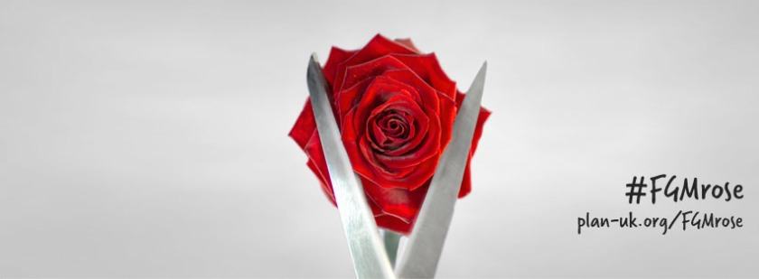 #FGMrose featured image